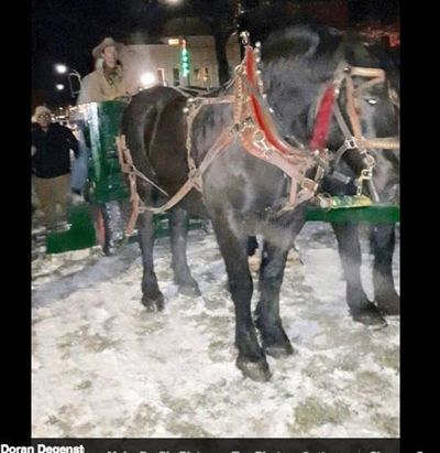 Winter Lights Festival with Horse & Carriage Rides-Cancelled: Nikka ...